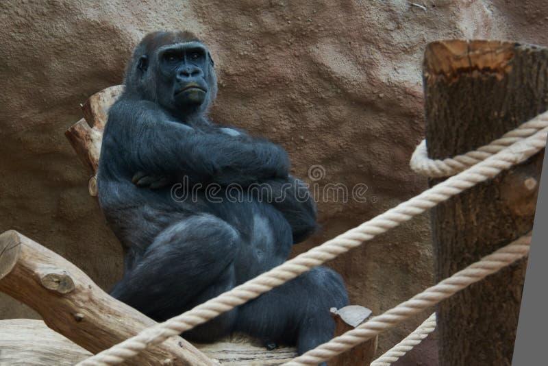 Tschechische Republik Prag-Zoo lizenzfreie stockfotografie