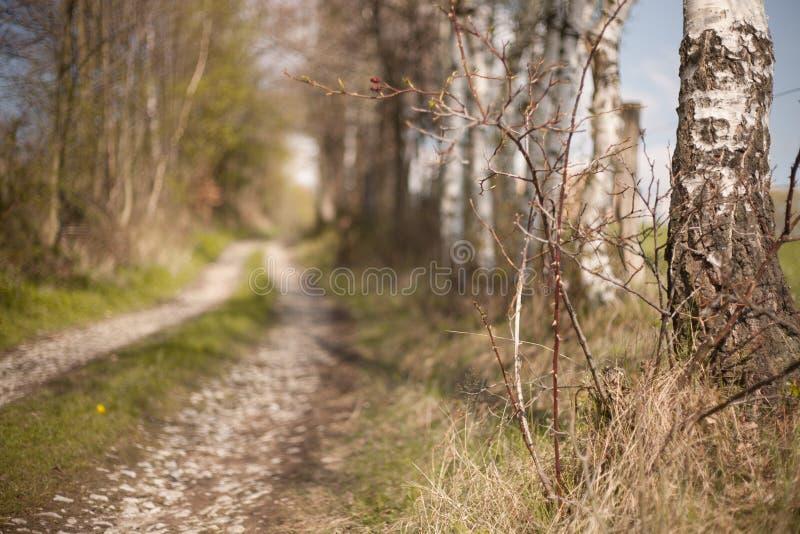 Tschechisches Waldlandschaftsweinlesefoto stockfoto