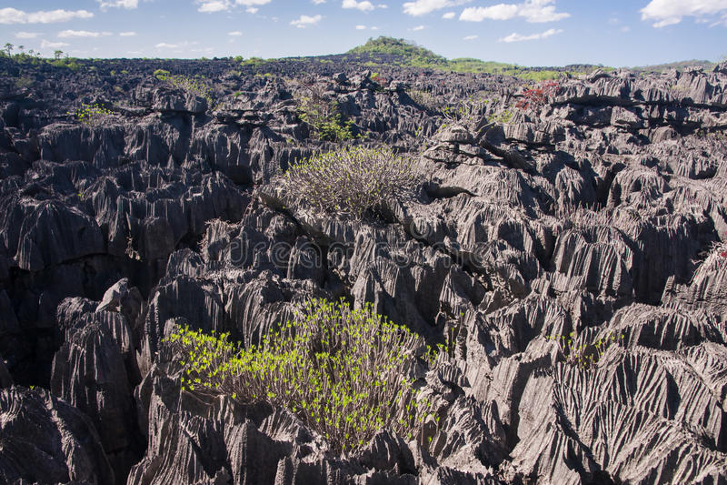 Download The Tsingy of Ankarana stock photo. Image of landscape - 24051830