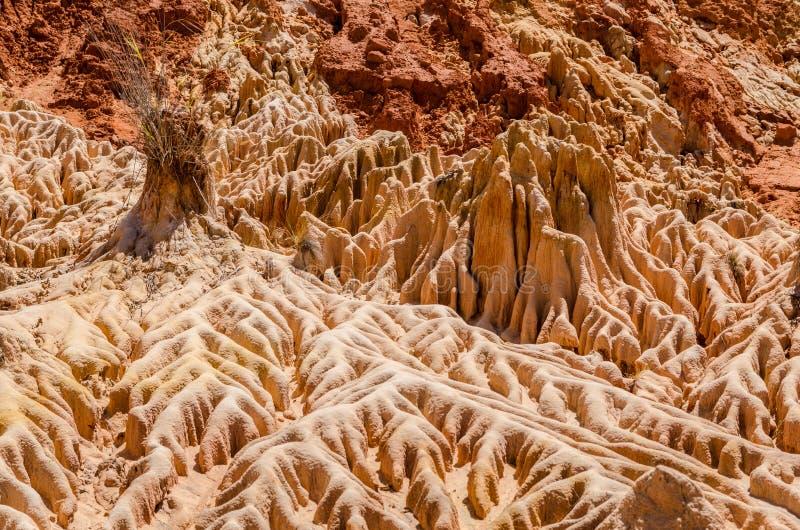 Tsingy in Ankarana Madagascar stock fotografie