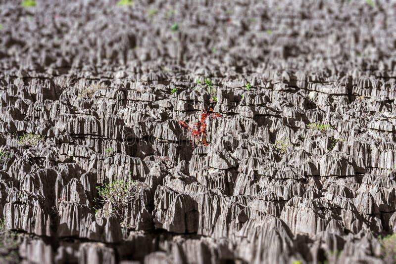 Tsingy de Ankarana fotos de archivo