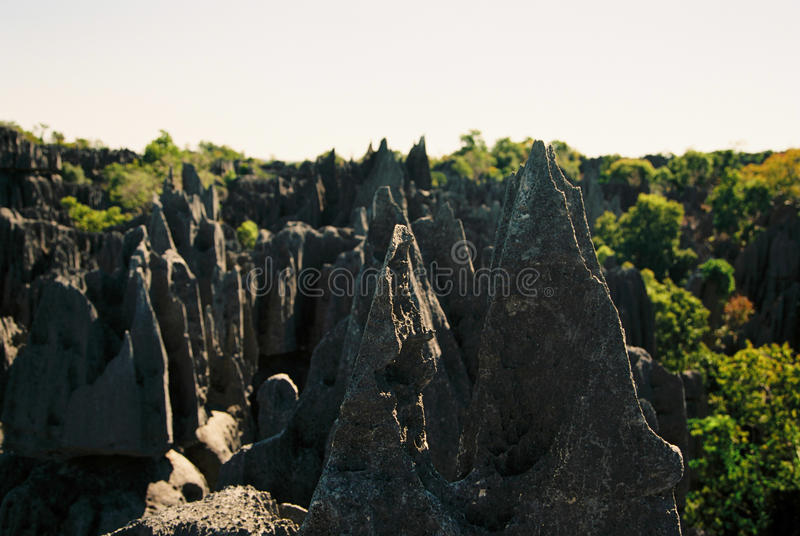 Tsingy Madagaskar stockfotografie