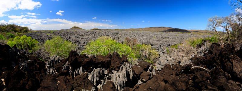 Tsingy vaggar bildande i Ankarana, den Madagascar vildmarken royaltyfria foton