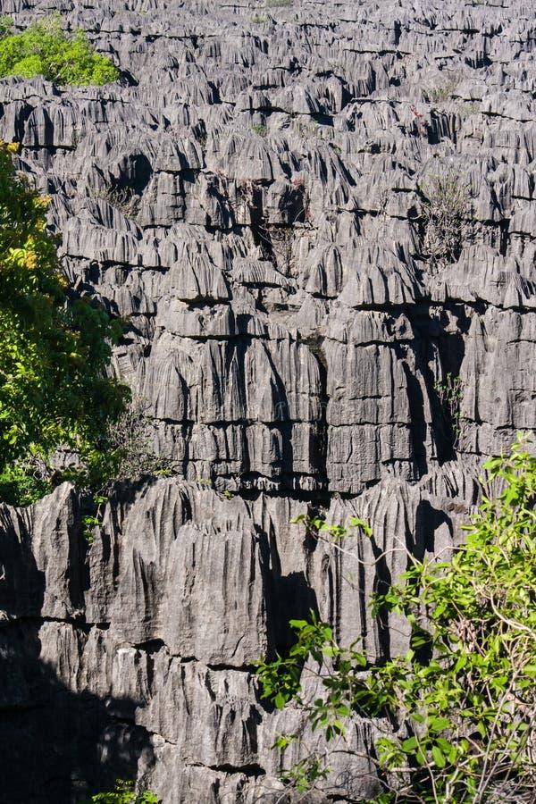 Tsingy van Ankarana royalty-vrije stock foto