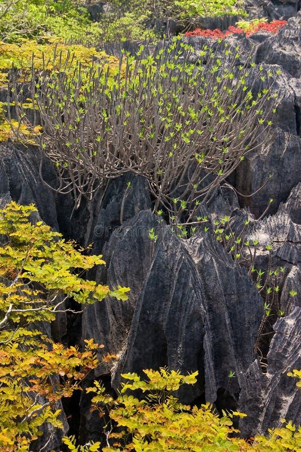Tsingy van Ankarana Madagascar stock afbeeldingen