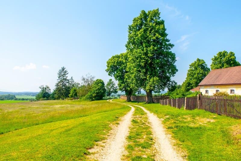 Tsjechisch landelijk landschap Groene bladbomen naast landweg Idyllische plaats om een rust te hebben royalty-vrije stock foto