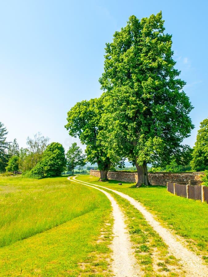 Tsjechisch landelijk landschap Groene bladboom naast landweg Idyllische plaats om een rust te hebben royalty-vrije stock foto