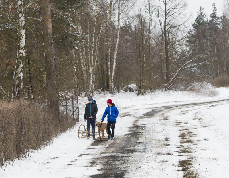 Tsjechische Republiek, travnik, 17 Maart, 2018: twee jongens met hond en s stock afbeeldingen