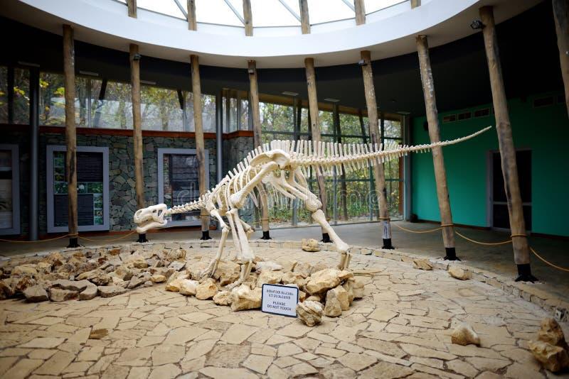TSKALTUBO, GEORGIA - 18 NOVEMBRE 2016: Scheletro del dinosauro, situato nella riserva naturale di Sataplia vicino alla città di K fotografie stock