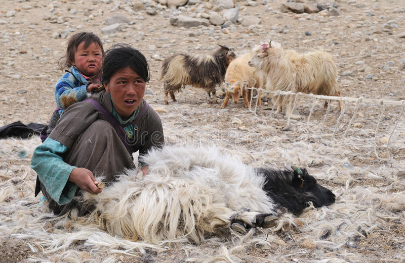 Tso Moriri nomadic family stock photo