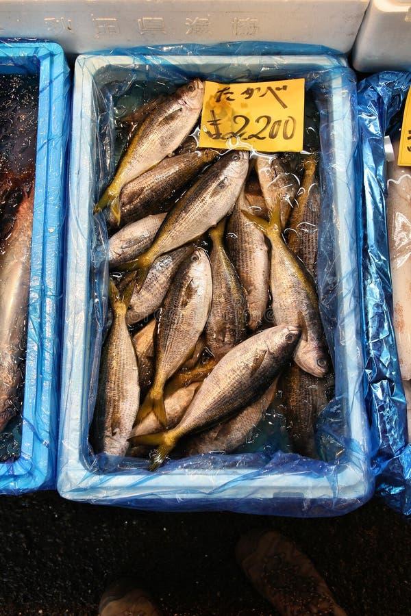 Tsukiji fiskmarknad royaltyfria bilder