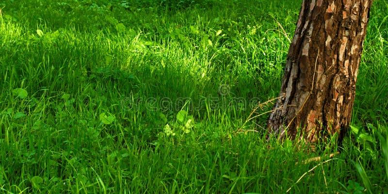 Ttextured trädstam och vibrerande grönt gräs arkivfoton