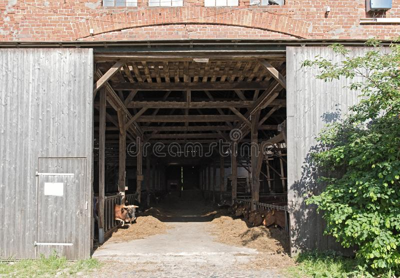Ttraditional red brick cowshed in the north of hamburg, gemany.  royalty free stock image