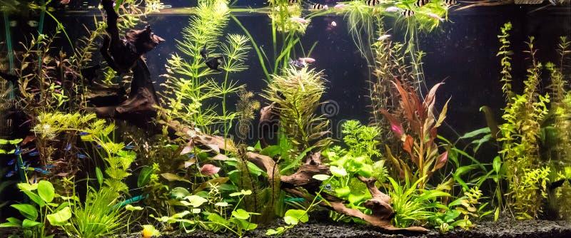 Ttropical sötvattens- akvarium med fiskar arkivbild
