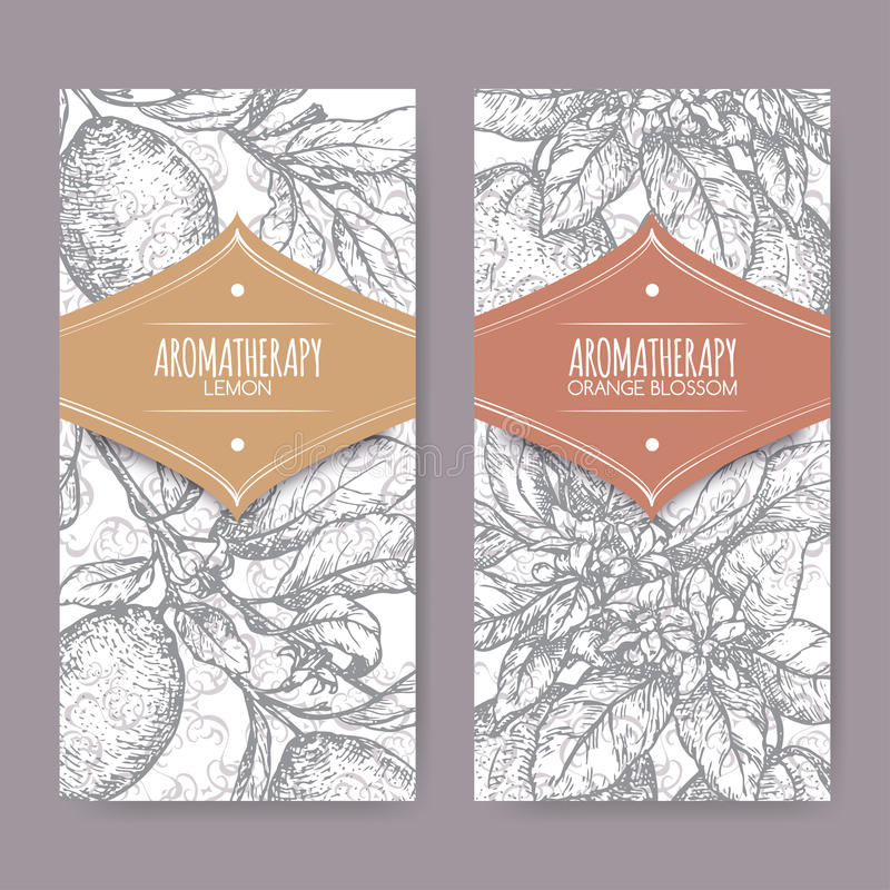 Ttwo labels with Orange blossom and lemon branch sketch stock illustration