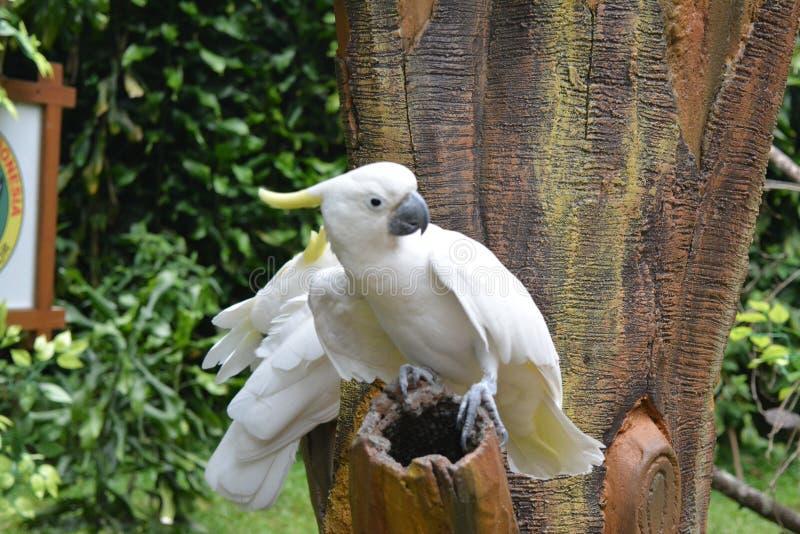 Tua πουλιών kakak στοκ εικόνες