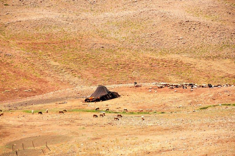 Download Tuareg tent in Morocco editorial stock image. Image of camel - 23036254 & Tuareg tent in Morocco editorial stock image. Image of camel ...