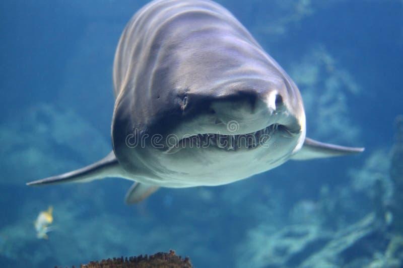 Tubarão fotos de stock royalty free