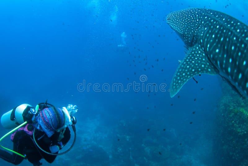 Tubarão de baleia de observação na rocha de Richelieu, Andaman norte foto de stock royalty free