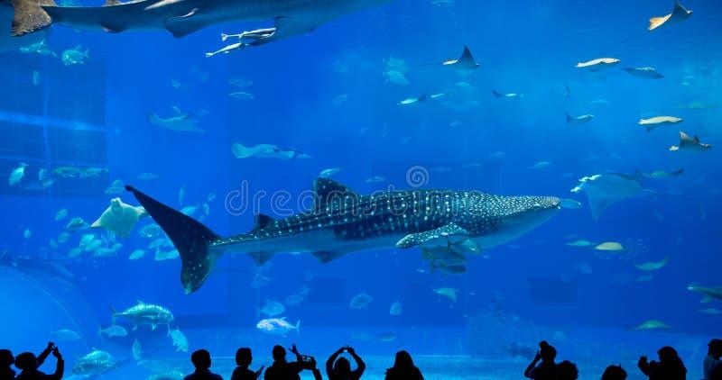 Tubarão de baleia gigante do underwate da fantasia imagens de stock
