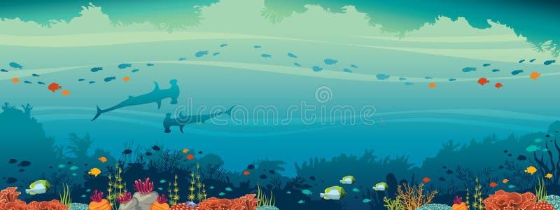 Tubarão de Hammerhead, peixe, recife de corais, mar subaquático ilustração do vetor