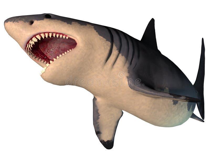 Tubarão de Megalodon no branco ilustração royalty free