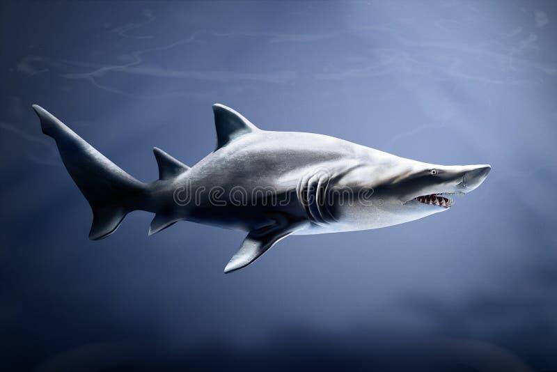 Tubarão de tigre da areia nas águas profundas imagem de stock