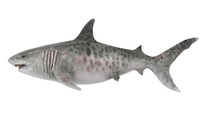 Tubarão gigante isolado ilustração do vetor