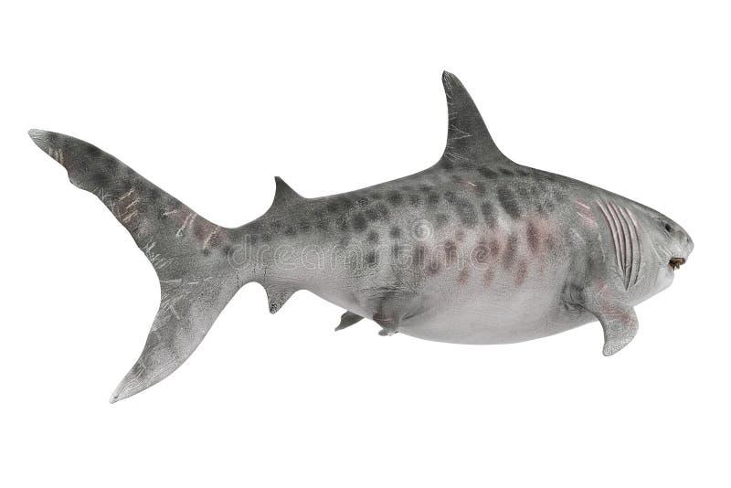 Tubarão gigante isolado ilustração royalty free