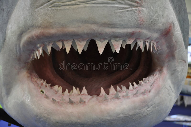 Tubarão grande imagens de stock