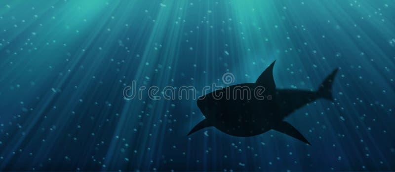 Tubarão Subaquático Foto de Stock