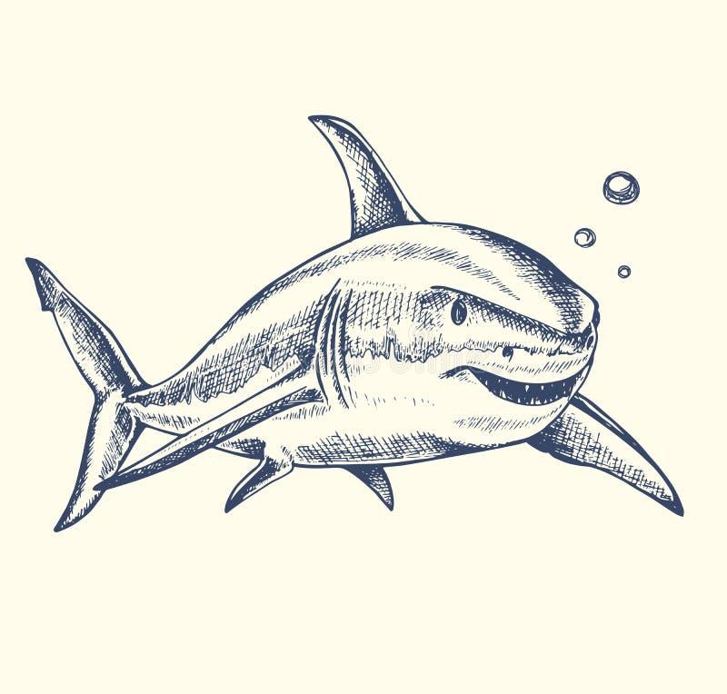 Tubarão tirado mão ilustração stock