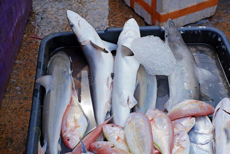 Tubarões do bebê imagem de stock royalty free