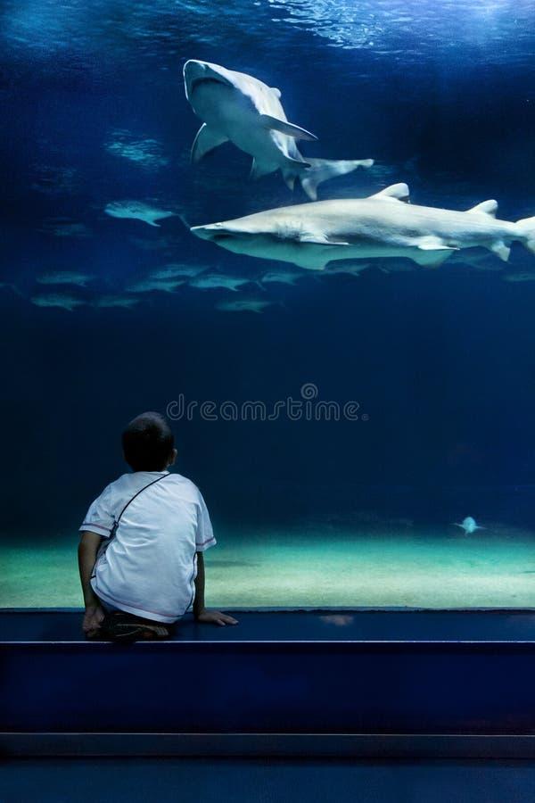 Tubarões e criança imagens de stock royalty free