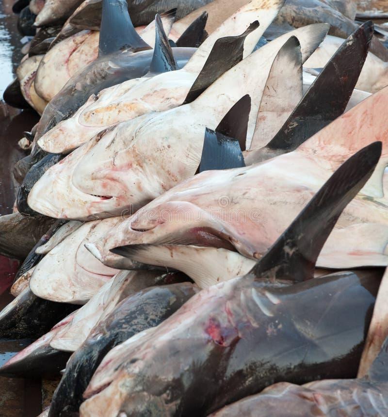 Tubarões inoperantes em um mercado de peixes fotografia de stock