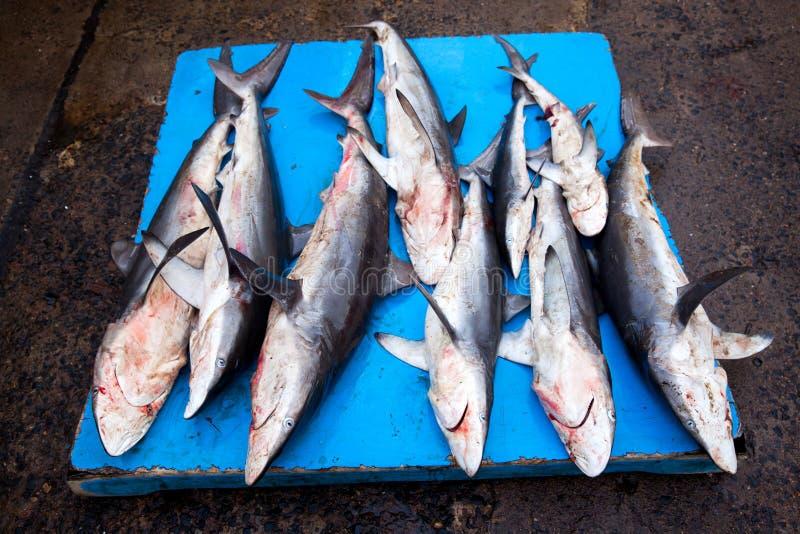 Tubarões no mercado de peixes imagem de stock