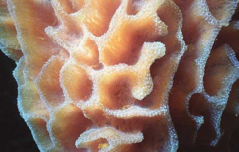 Tube Sponge Detail Stock Photography