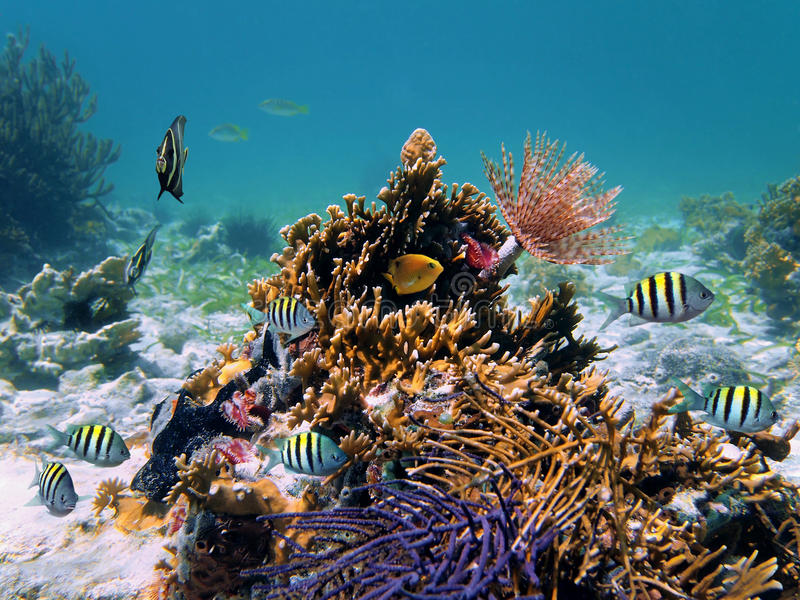 Tube worm and coral reef royalty free stock photography