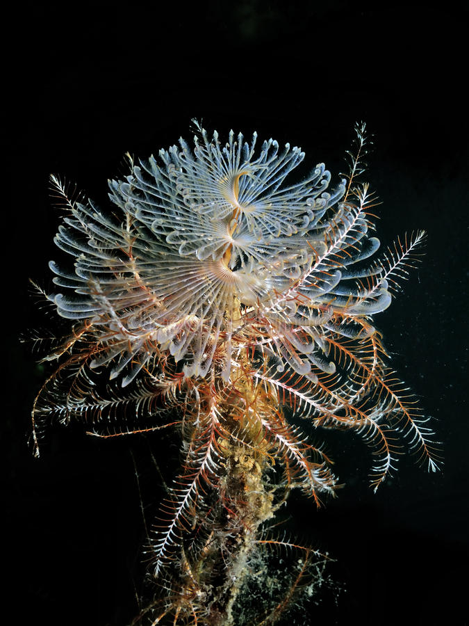 Tube Worm With Crinoids royalty free stock photography
