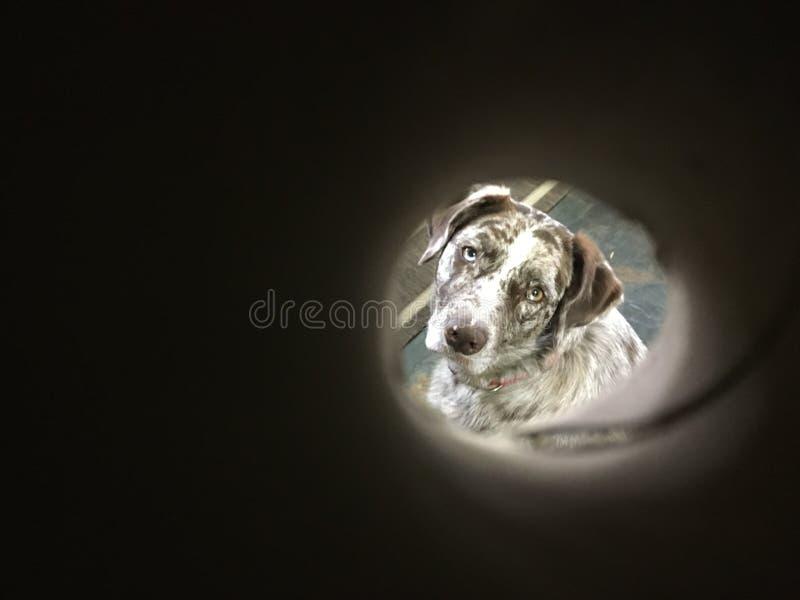 Tubed Dog Free Public Domain Cc0 Image