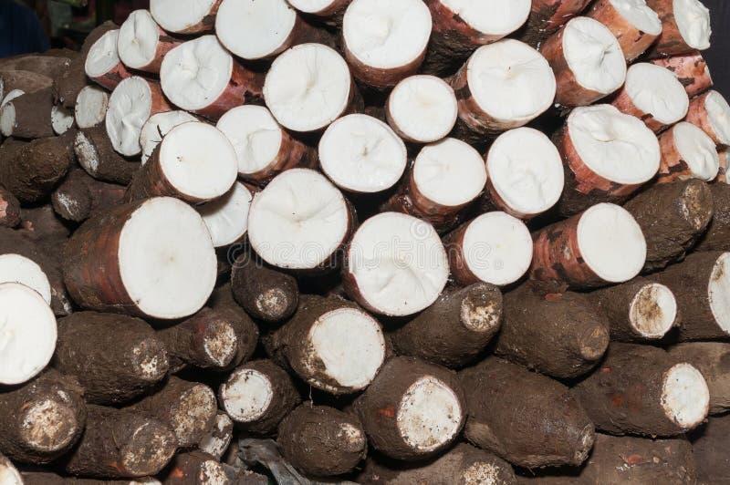Tubercule cru de manioc - Manihot esculenta images stock