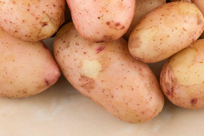 Tuberi di giovani patate crude fotografie stock libere da diritti