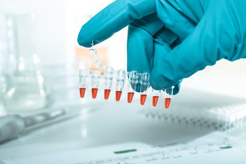 Tubes en plastique préparés pour l'amplification de l'ADN image stock