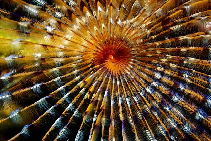 tubeworm макроса стоковое изображение rf