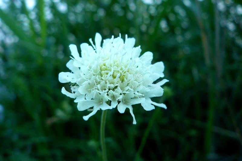 Tubformig växt av mjuk vit färg arkivbilder