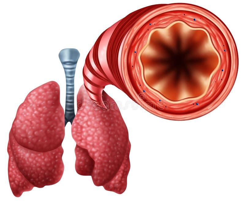 Tubo bronquial sano stock de ilustración