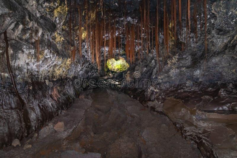 Tubo De Lava Oscuro Y Subterráneo En El Parque Estatal De Las Cuevas De Kaumana En Hilo, Gran Isla, Hawaii, Estados Unidos imagen de archivo libre de regalías