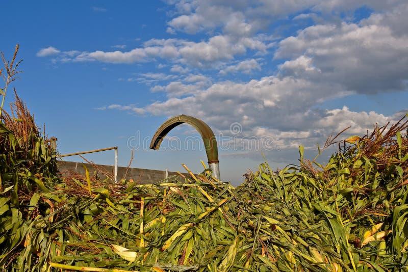 Tubo del ventilatore dai gambi del cereale e di un selettore rotante fotografia stock