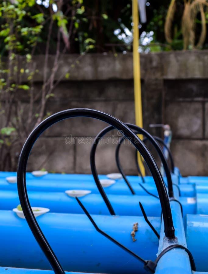 Tubo di gomma sul tubo del PVC all'azienda agricola di agricoltura di coltura idroponica fotografia stock