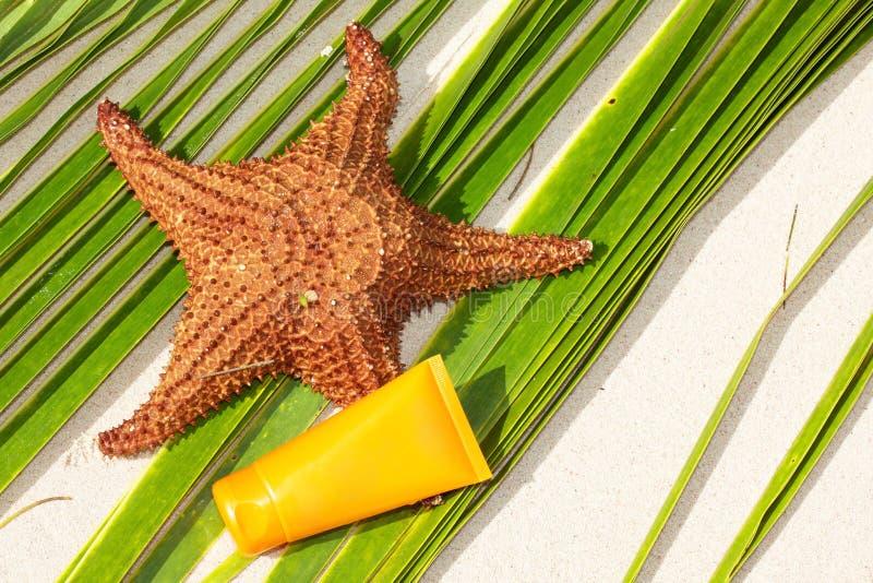 Tubo di protezione del sole e delle stelle marine su foglia di palma immagini stock